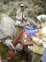 Warmes Mineralwasser für's Pferd
